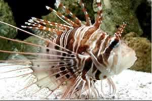 热带鱼拼图