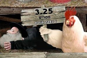 农场偷鸡蛋