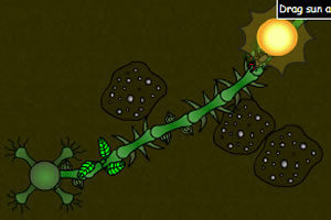 螞蟻與植物的戰爭